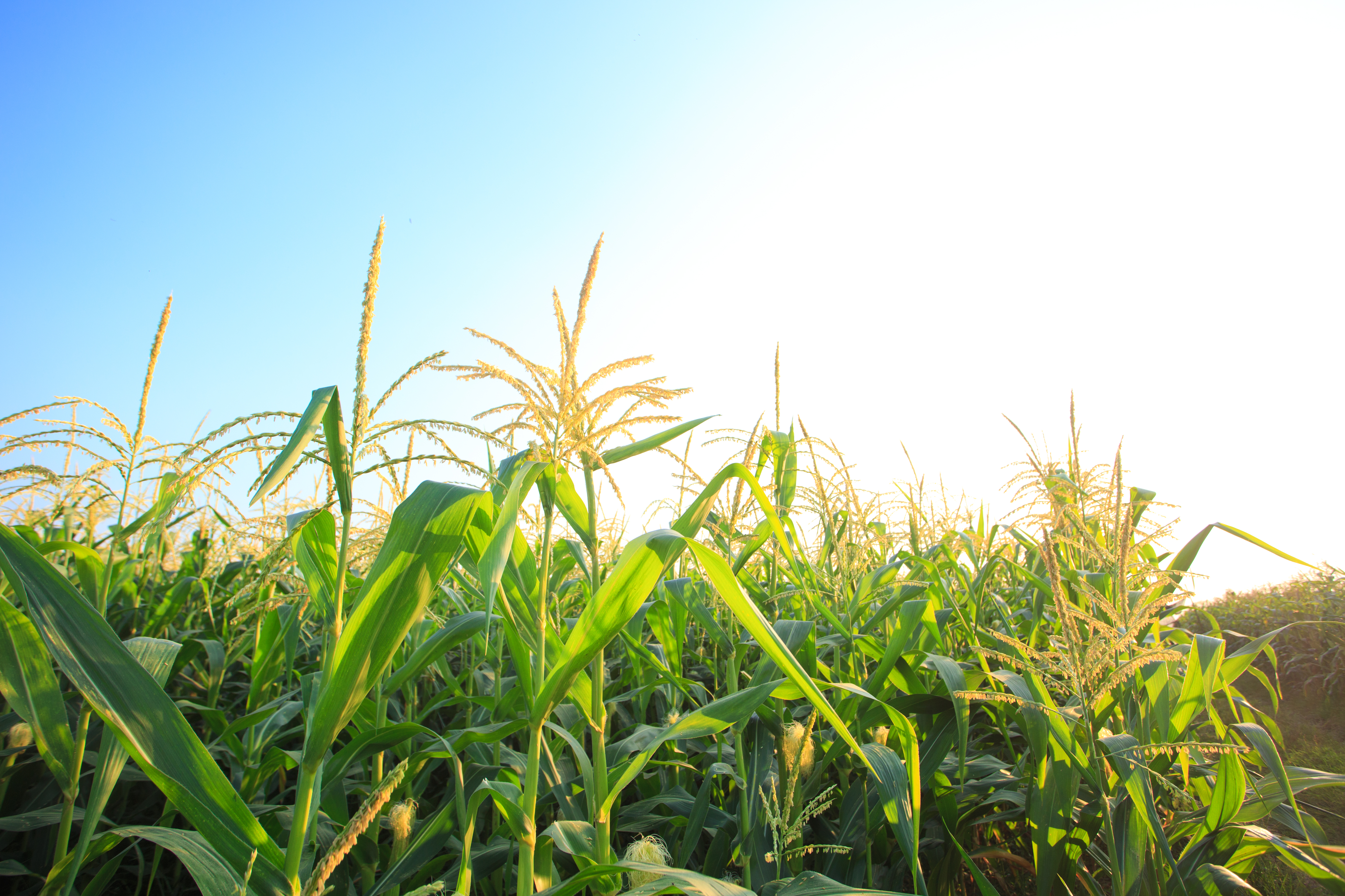 NFU Urges Implementation of E15 Waiver, Common-Sense Provisions for Higher Level Blends